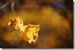 Золотая пара