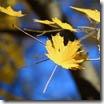 Золото осени плавит октябрь