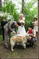 Помощник на свадьбе