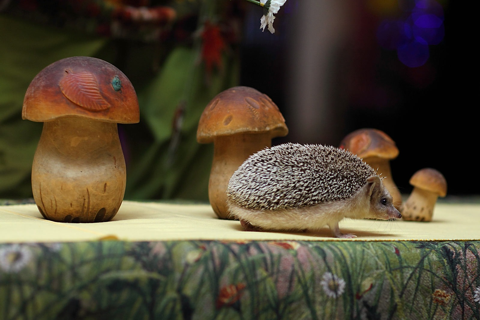Ежики на дне рождения: http://www.photo-platov.ru/daby-hedgehogs.html